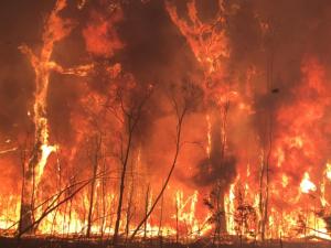 10 children allegedly started recent Queensland bushfires, police say
